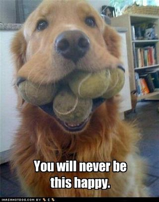 Funny-dog-pictures-you-will-never-be-this-happy